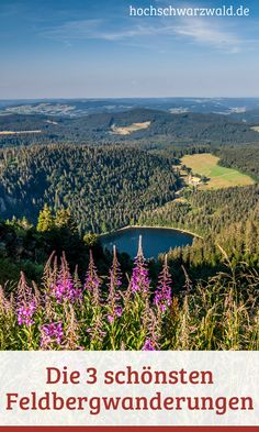 Wandern auf dem höchsten Berg im Schwarzwald. Tipps für Touren rund um den Feldberg. #schwarzwald #wandern #wanderlust #wandertouren #sommer #outdoor #reisen
