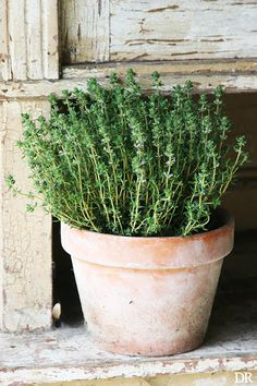 """potted herbs"" - < & Flowery things ... 1) ... http://www.pinterest.com/chris556371/artistic-design-interiors-and-exteriors/ , 2) http://www.pinterest.com/chris556371/natural-nature-gadgets/ , and 3) ... http://www.pinterest.com/chris556371/flowers-gardens/ >"
