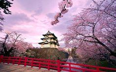 Japan, bloom