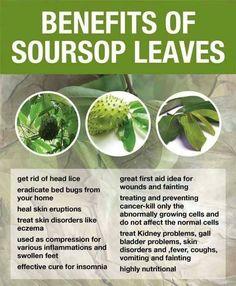 Health benefits of my favorite, Sour Sop