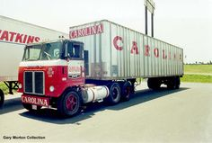 carolina_white_coe.jpg (800×540)