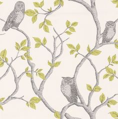 Little Owl Grey / Green wallpaper by Albany