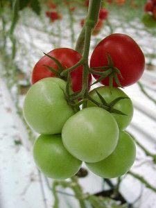 Flora, Gardening, Fruit, Vegetables, Plants, Garten, The Fruit, Vegetable Recipes, Plant