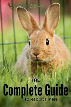 Rabbit Diseases Reference Guide - Raising Meat Rabbits