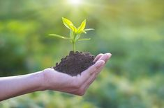 Human hand holding young plant with soil on nature background, environment concept Tree Removal Cost, Single Tree, Sunset Wallpaper, Room To Grow, Environment Concept, Environmental Design, Green Building, Agriculture, Adobe