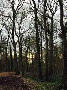 Forêt St Germain France