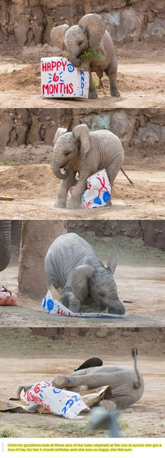 Happy Half-Birthday Baby Elephant