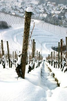 Winter View Of Snow Covered Vineyards With German Village In.. | Photo by itakefotos4u with Pin-It-Button on http://www.123rf.com/photo_15024129_winter-view-of-snow-covered-vineyards-with-german-village-in-the-distance.html