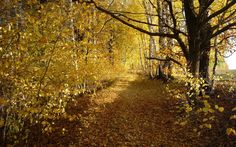 Download wallpaper trees, road, autumn, birch leaves, grove, nature resolution 1280x800