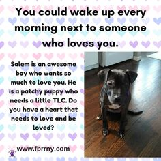 You could wake up every morning next to someone who loves you. Salem is awesome and is looking for love!!! #adoptme #furbabiesrescue #dogs #puppy #rescuedog #rescueme #shareme #repin