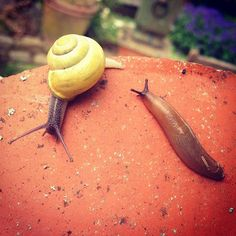 This morning began with me and @Tanya Burr hunting out snails & slugs in the garden Don't ask. Follow me on Instagram @Zoe Sugg ♥