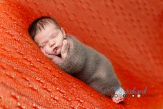 newborn photography, wrapped poses