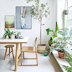 Indoor greenspiration bring green indoors using baskets as plant pots - seagrass baskets like this one in store now  by Christina Kayser Onsgaard via Real Living Mag #indoorgreen #interiorinspo #bowerhouse #greenspiration