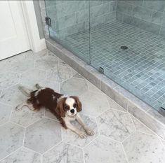 Zenith Carrara Marble Hexagon Tile in White Hexagon Tile Bathroom Floor, Carrara Marble Bathroom, White Marble Bathrooms, Honed Marble, Bath Tiles, Hexagon Tiles, Marble Tiles, Bathroom Flooring, Tile Floor