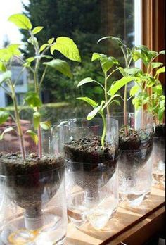 Reuse 2 liter bottles in Self-Watering Seed Starter Pots.  This will work with smaller plastic bottles as well.
