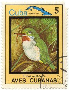 Cuban Tody