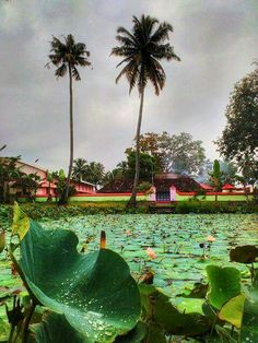 The Beauty of Kerala- Amazing Photos Kerala Travel, India Travel, Kerala India, South India, Landscape Photography, Nature Photography, Creative Photography, Amazing Photography, Cool Pictures
