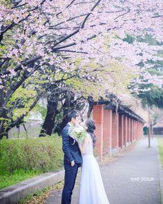 #さくらロケーション前撮り . . いよいよ . さくらロケーション前撮りの季節が . やって来たぞぉー .  . . #たまたま見つけたさくら #今年はどんなさくらに出会えるんだろう #ちなみに雨降ってます . #結婚写真 #花嫁 #プレ花嫁 #卒花 #結婚式 #結婚準備 #ロケーション前撮り #カメラマン #ウェディング #前撮り #結婚式前撮り #写真家 #ゼクシィ #名古屋花嫁 #和装前撮り #持ち込みカメラマン #ウェディングフォト #2017春婚 #結婚式レポ #アサダユウスケ #赤いカメラ #日本中のプレ花嫁さんと繋がりたい #日本中の卒花嫁さんと繋がりたい #ウェディングニュース  #weddingphoto #バンプデザイン