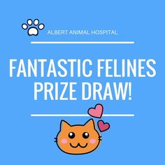 FANTASTIC FELINES   In November we are focusing on our Feline Friends   If its been a while come on in for a visit. We would love to see you and your fantastic feline.  Not only will your cat receive a thorough examination but during the month of November you and your kitty could WIN a fantastic prize!  Call the Albert Animal Hospital on 3208 9233 and book in your cat meow.   #fantasticfelines #catraffle #win #prizedraw #haveweseenyourcatlately #pethealth #cats #lovecats…