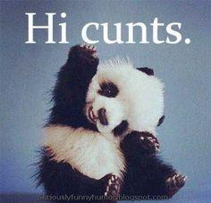 Hi cunts #Panda #funny and waving