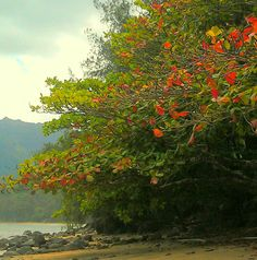 Kauai~ Hanalei Bay