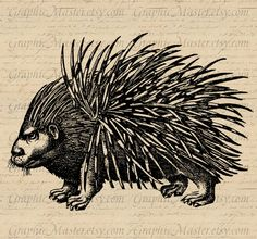Antique Angry Porcupine Animals Vintage Image Collage Sheet Iron On Transfers Clothing Fabrics Burlap Pillows Tea Towels Tote Bags a235. $1.00, via Etsy.