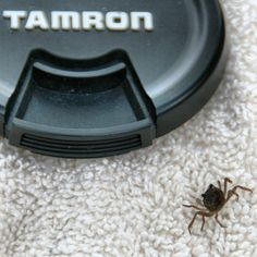 Day 17: Tiny - Tiny crab on my towel in Costa Rica. #fmsphotoaday