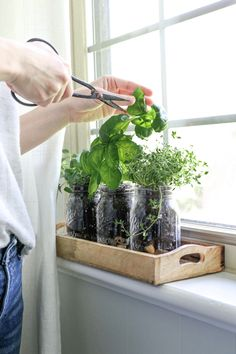 Excellent Pic mason jar Herb Garden Strategies Handy dandy approaches for growing a culinary herb garden together with a listing of herbs for start Mason Jar Plants, Mason Jar Herb Garden, Plants In Jars, Pot Mason, Small Mason Jars, Mason Jar Diy, Herb Planters, Herb Pots, Small Herb Gardens