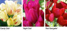 Tulppaanit - Muhevainen - Kaikki pihan kasvit