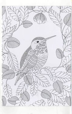 Millie Marotta's Colouring in Card - House Sparrow