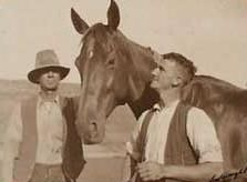 A Tribute to Phar Lap