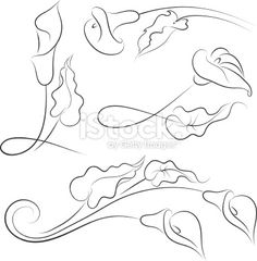 calla lily vector art free | Calla lily - Illustration