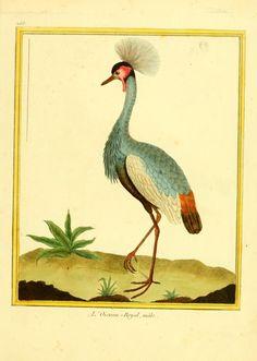 Planches enluminées d'histoire naturelle - Biodiversity Heritage Library