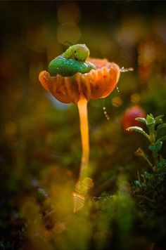 Natures treasures