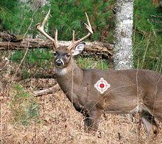 deer hunting!