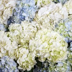 Bulk Flowers Via Costco - 30 stems assorted hydrangeas $85