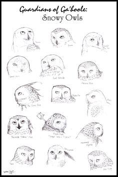 Snowy Owls of Ga'hoole by Spectra-Sky on DeviantArt