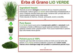 Scopri il mondo dell'Erba di Grano ed i suoi molteplici benefici www.lioverde.com/
