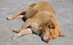 CARBONIA, 400 CANI IN CERCA DI CASA: 1.500 FIRME PER LA PETIZIONE » Fbsocialpet.com: il social forum per cani, gatti, cavalli, tutti gli animali