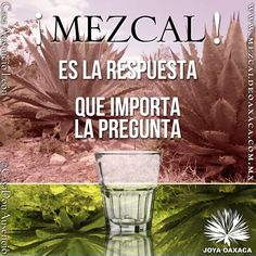 Que importa la pregunta, MEZCAL es la respuesta #Phrases #frases #Quotes #mezcal…