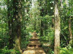 Chemin de randonnée vers la 3ème Chute du Carbet en Guadeloupe, sur Basse-Terre.