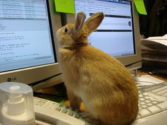If I had this bunny I wouldn't have to learn about the stock market.