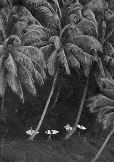 black and white + photography + surf + palm tree Composition Photo, Photo Deco, Black And White Aesthetic, Surf Style, Surfs Up, Island Life, Picture Wall, Summer Vibes, Summer Feeling