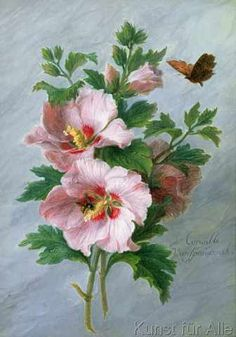 View Hibiscus by Cornelis van Spaendonck on artnet. Browse upcoming and past auction lots by Cornelis van Spaendonck. Art Floral, Illustration Botanique, Art Et Illustration, Botanical Flowers, Botanical Prints, Impressions Botaniques, Beautiful Paintings, Vintage Flowers, Art Reproductions