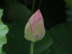 森川花はす 2