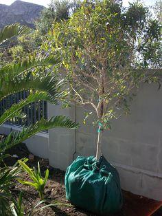 Forest Elder Bagged and ready for relocation! Business Design, Landscape Design, Landscaping, Plants, Plant, Landscape Architecture, Landscape, Landscape Designs, Garden Design