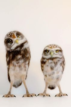 Needle felted burrowing owls by Yvonne Herbst.