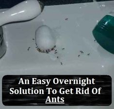 An Easy Overnight Solution To Get Rid Of Ants