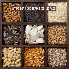 8 Tips for Long Term Seed Storage
