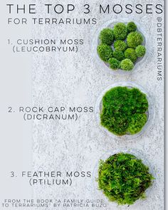 Excerpt from the book A Family Guide to Terrariums by Patricia Buzo The top 3 moss species to use in glass jars Succulents Garden, Garden Plants, Indoor Plants, Planting Flowers, Succulent Planters, Indoor Gardening, Hanging Planters, Moss Plant, Paludarium